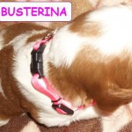 Busterina