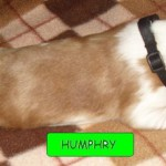 Humphry